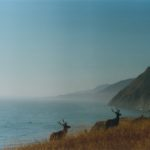 Lost Coast Elk by Daniel Raskin Photography