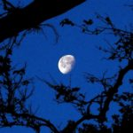 Moon and Tree by Daniel Raskin Photography