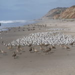 Ocean Beach Birds by Daniel Raskin Photography
